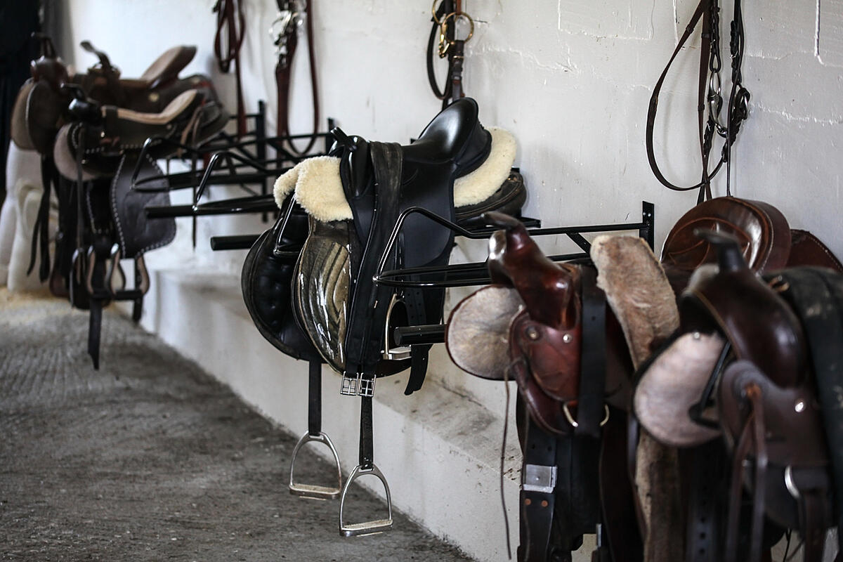 Horse saddles in tack shed