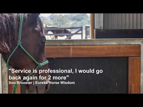 Eureka Horse Wisdom - ABC Sheds