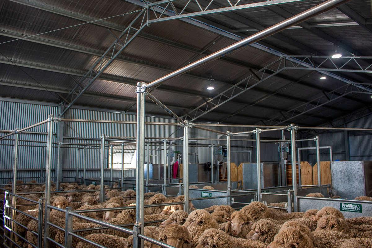Inside shearing shed - Boorowa