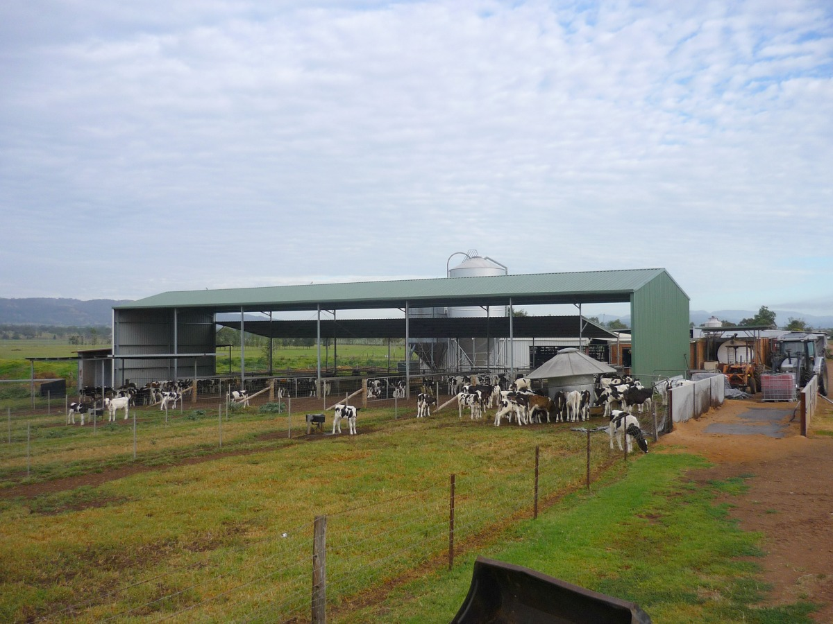 Dairy Shed